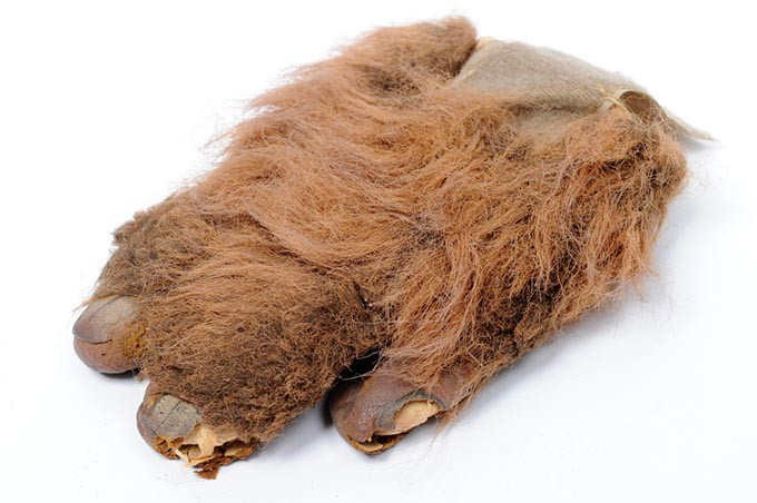 Part of a costume worn by Kendra Wall-Dahl photographed at the Oklahoma Gazette, Thursday, Dec. 17, 2015.  Kendra played an Ewok in Star Wars Episode VI:  Return of the Jedi. - GARETT FISBECK