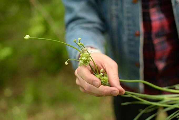 Local chef and foodie Andon Whitehorn forages for edible plants in Yukon. (Garett Fisbeck)