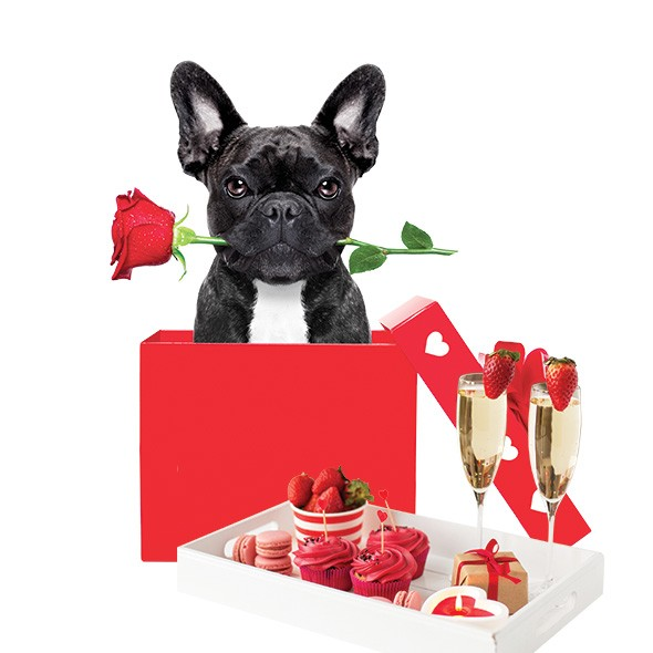 Though millennials and people in Generation Z spend Valentine's Day a little differently than most other generations — even treating their pets to gifts — holiday-related sales are expected to increase this year. - BIGSTOCK.COM