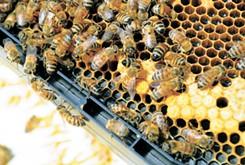 Bees make life sweet