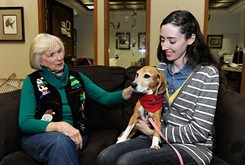 Therapy dogs on the rise