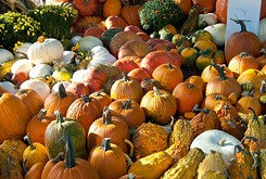 Pumpkinville returns to the Children's Garden at Myriad Botanical Gardens, FlashBack RetroPub opens and October is National Seafood Month.