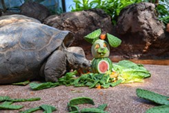 """PRESS RELEASE Zoo announces """"OKC Zoo @ Two"""" weekly schedule, new online education connection component"""
