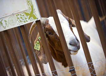 Cover story: Your guide to state fair quirk