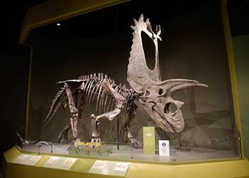 Norman's Sam Noble Oklahoma Museum celebrates 30 years as 'the dinosaur museum'