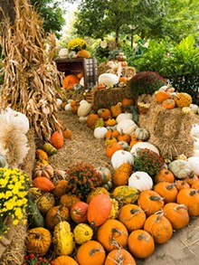 Fall Guide: Pumpkin patches