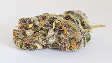 Flower review: Purple Tangie
