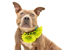 31 super-cute dogs waiting for you at Orange County Animal Services
