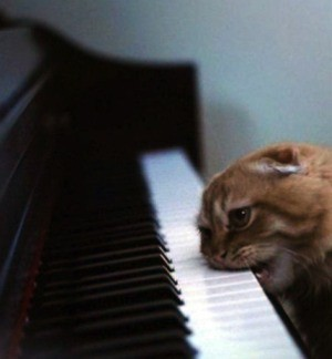 IMAGE VIA AGITATEDCATMUSIC.COM