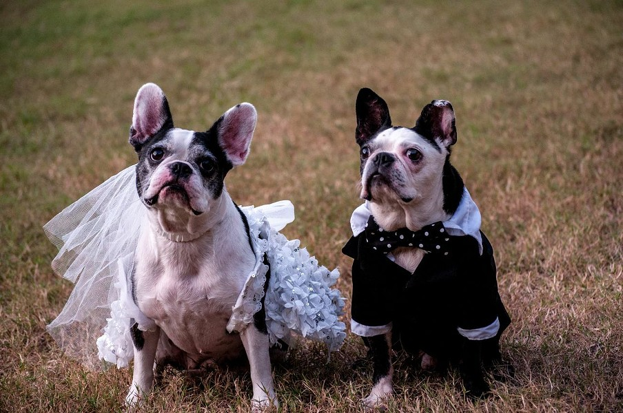 See all the ADORABLE photos from the wedding now. - PHOTOS COURTESY OF THE GROOM'S OWNER