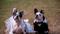 Something borrowed, something CUTE: French bulldog weds Boston terrier, see pics from the Orlando ceremony!