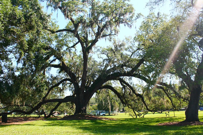 Branching out: A photo tour of Orlando's Significant Trees Map