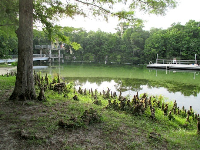Behold the beauty of Silver Springs, playground for the second Creature feature. Photo by Ashley Belanger.