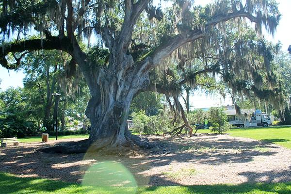 Big Tree Park - PHOTO BY ASHLEY BELANGER