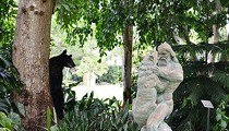 Black Bear Looks On, Laughs As Naked Dude Strangles Wolf