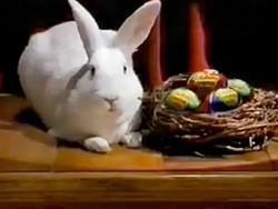 cadbury-rabbit_400.jpg