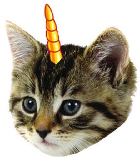 Cool Kitten Head