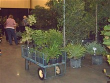 © 2014 LORET - Create Real Florida Gardens
