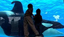 "Dear Film Critic: SeaWorld vs. ""Blackfish"", a documentary about Tilikum the whale and the death of trainer Dawn Brancheau"