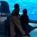 """Dear Film Critic: SeaWorld vs. """"Blackfish"""", a documentary about Tilikum the whale and the death of trainer Dawn Brancheau"""