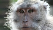 Did you know there's a plan to build a secret monkey-breeding facility in Florida?