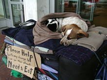 PHOTOS COURTESY OF PETS OF THE HOMELESS