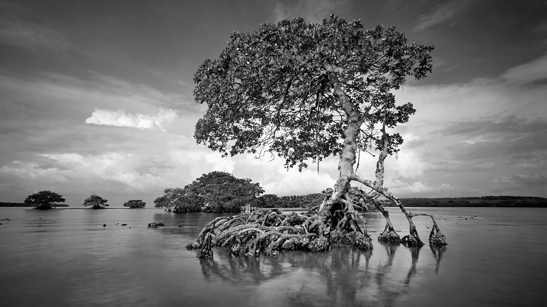'Gaskin Bay' - CLYDE BUTCHER