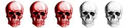 3_skullsjpg