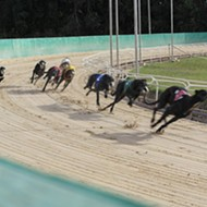 Greyhound racing in Florida to be discussed during 2015 Legislative session