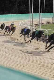 Greyhounds run the track at the Sanford Orlando Kennel Club