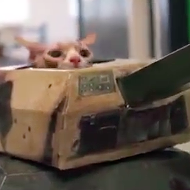 Happy Friday. Here is a short adventure film starring a cat driving a tank