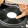Happy Monday. Here are some kittens learning to be DJs.