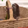 Happy Wednesday! Here's what a sloth sounds like!