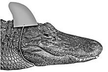 0518-alligatorjpg