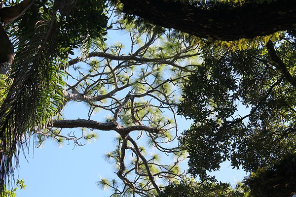 H.H. Dickson Azalea Park - PHOTO BY ASHLEY BELANGER