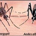 What you can do to combat the mosquito-borne chikungunya virus