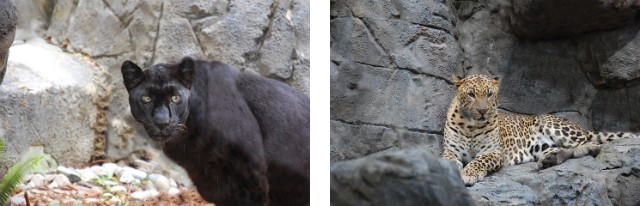 Image via Central Florida Zoo andBotanical Gardens