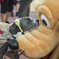Disney Side Dog's Day a wagging success