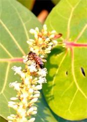 Image via Florida Keys Honey and Bees