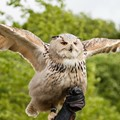 Audubon Center for Birds of Prey to host owl meet and greet