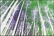 ocalaforest2-17jpg