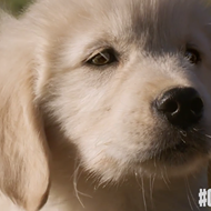 Irate animal lovers want GoDaddy to ditch tasteless SuperBowl commercial