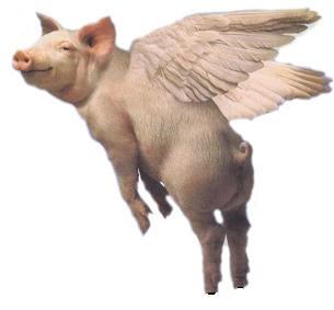 flying_pigjpg