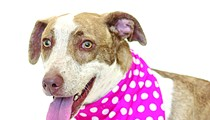 Mocha is available from Orange County Animal Services