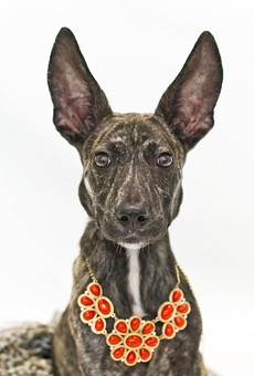 Orange County Animal Services is full, so now would be a great time to adopt a pet