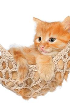 Orlando pet-lover's resource directory
