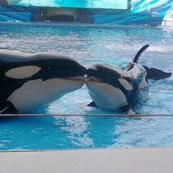 PETA is a SeaWorld shareholder, and they're suggesting that the company invest in orca sanctuaries