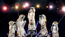 "Video Preview: Ringling Bros. Barnum & Bailey's ""Built To Amaze"""