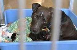 Photo courtesy Orange County Animal Services