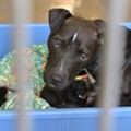 Orange County Animal Services wants help emptying the shelter